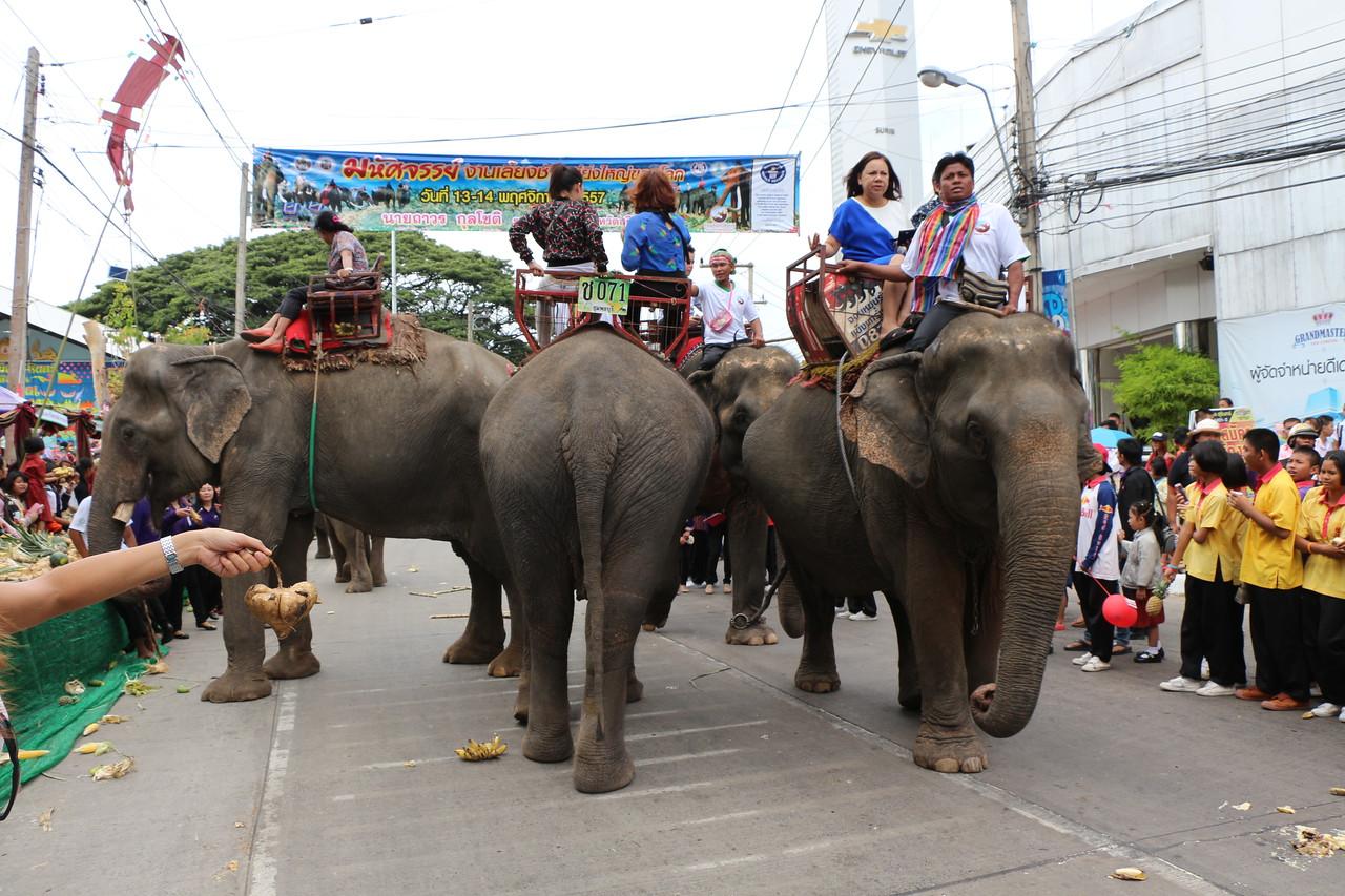 2014-11-14 Surin Elephant Welcome Feast 247