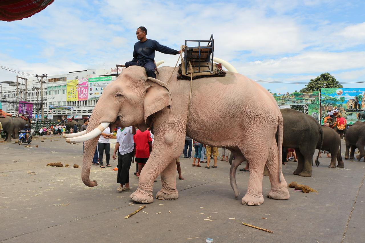 2014-11-14 Surin Elephant Welcome Feast 823
