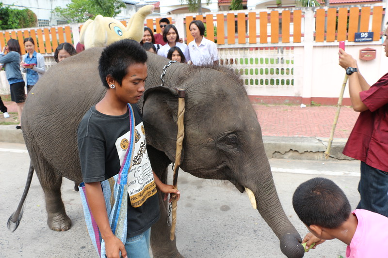 2014-11-14 Surin Elephant Welcome Feast 506.JPG