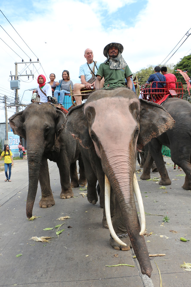 2014-11-14 Surin Elephant Welcome Feast 577