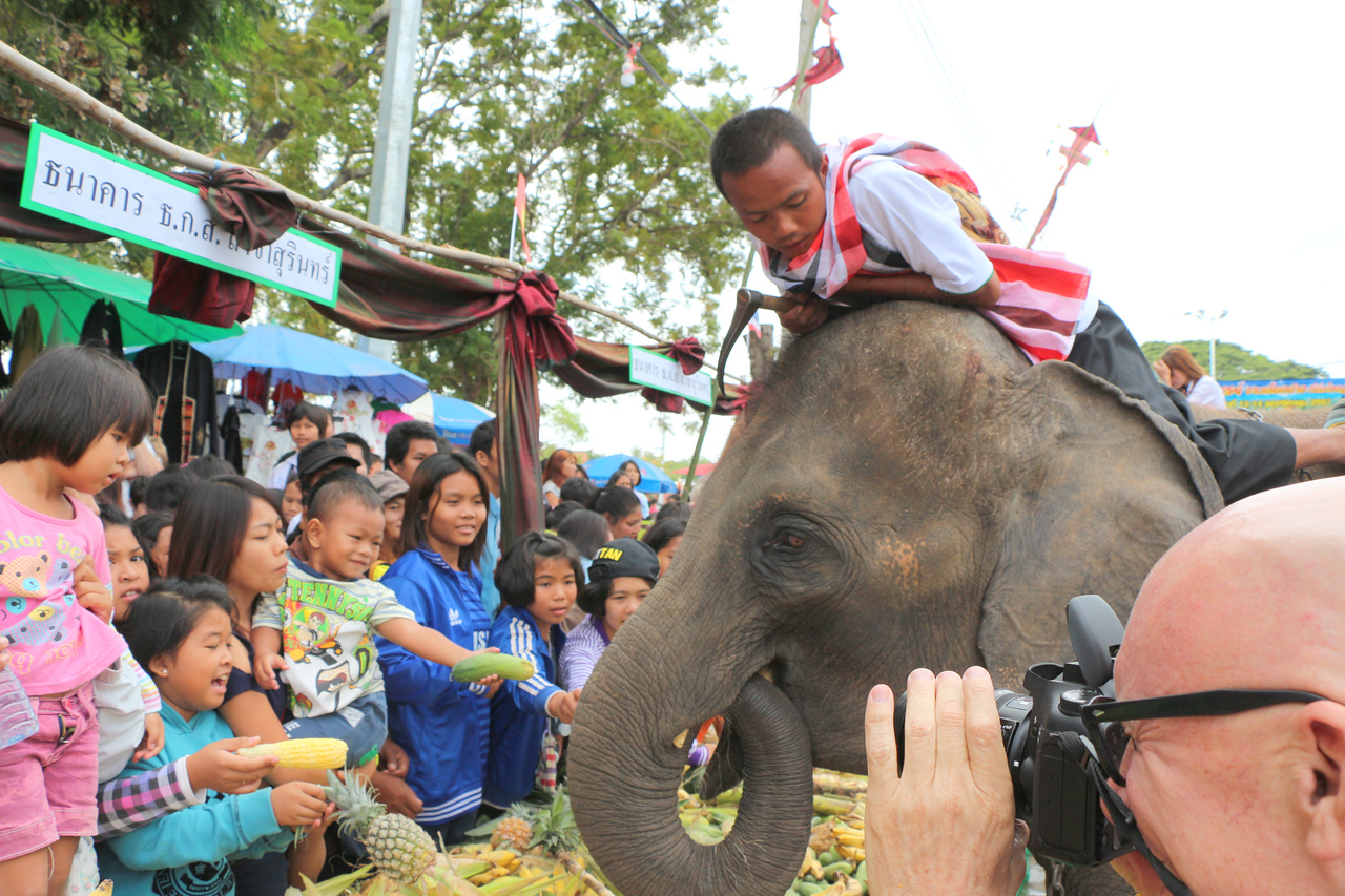 2014-11-14 Surin Elephant Welcome Feast 328
