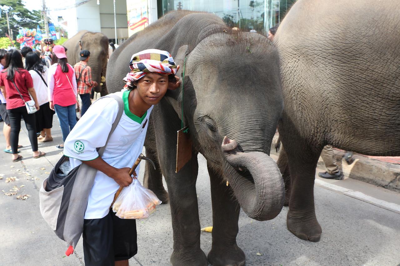 2014-11-14 Surin Elephant Welcome Feast 400