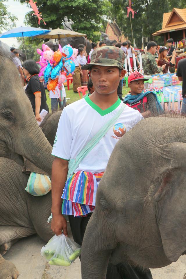 2014-11-14 Surin Elephant Welcome Feast 805