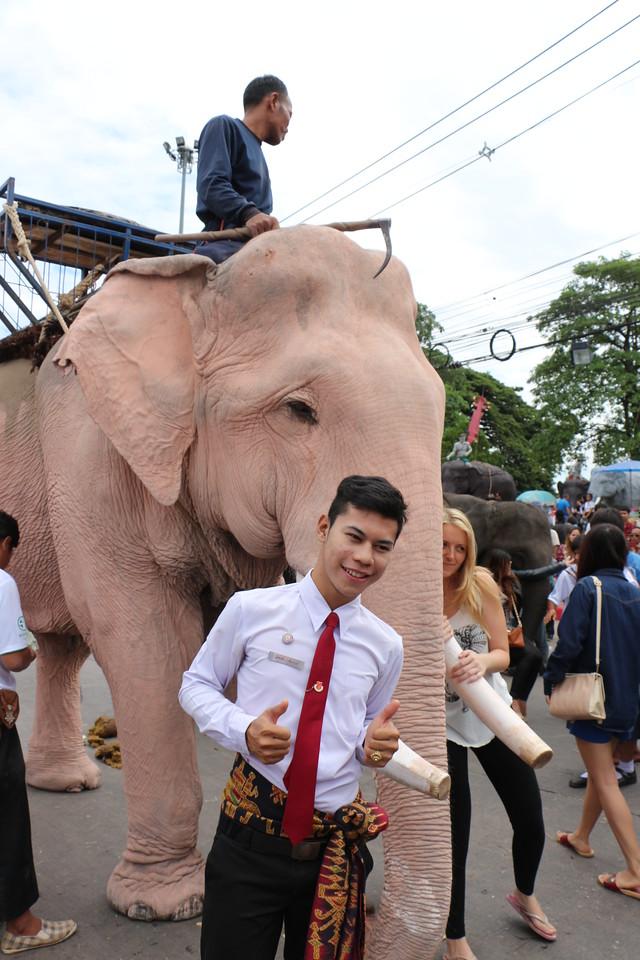 2014-11-14 Surin Elephant Welcome Feast 658