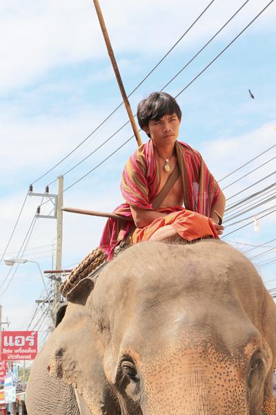 2014-11-14 Surin Elephant Welcome Feast 486.JPG