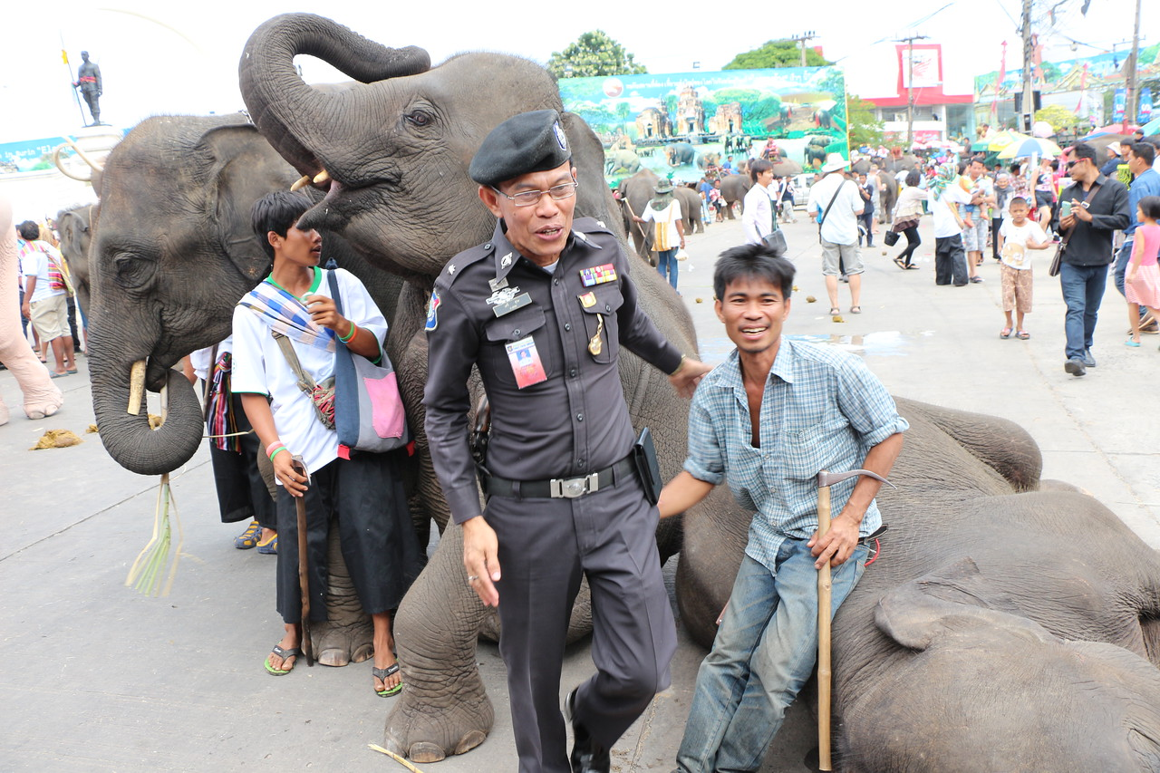2014-11-14 Surin Elephant Welcome Feast 680