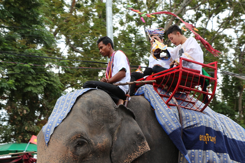 2014-11-14 Surin Elephant Welcome Feast 201
