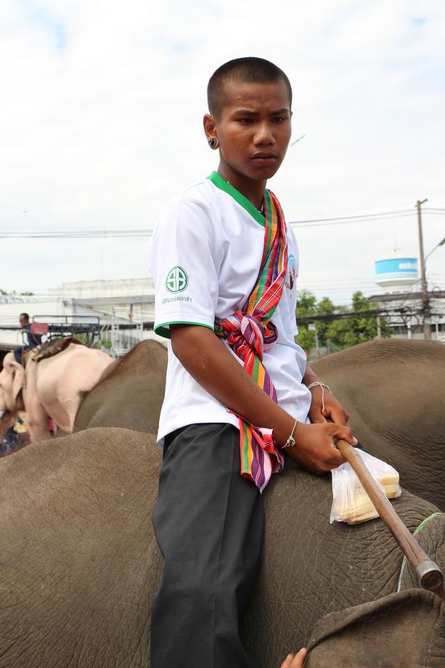 2014-11-14 Surin Elephant Welcome Feast 844