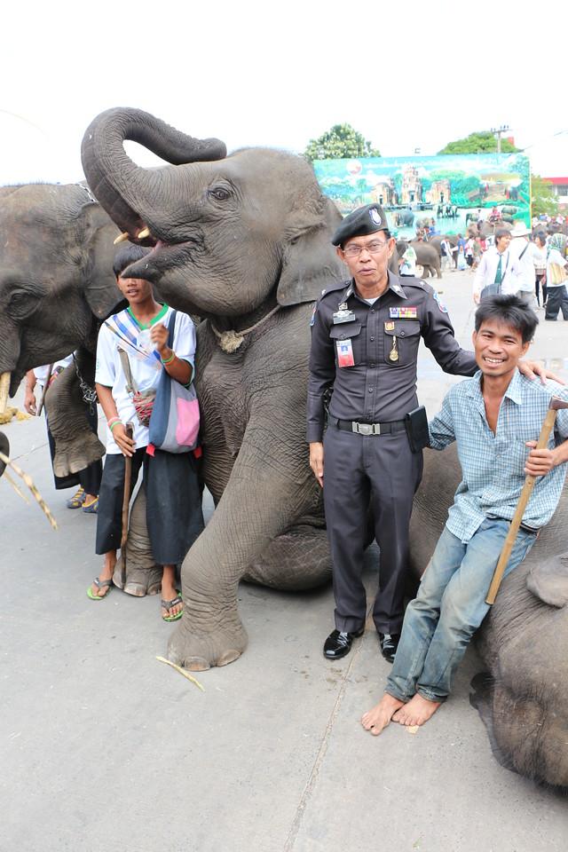 2014-11-14 Surin Elephant Welcome Feast 679