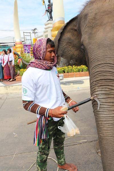 2014-11-14 Surin Elephant Welcome Feast 831.JPG