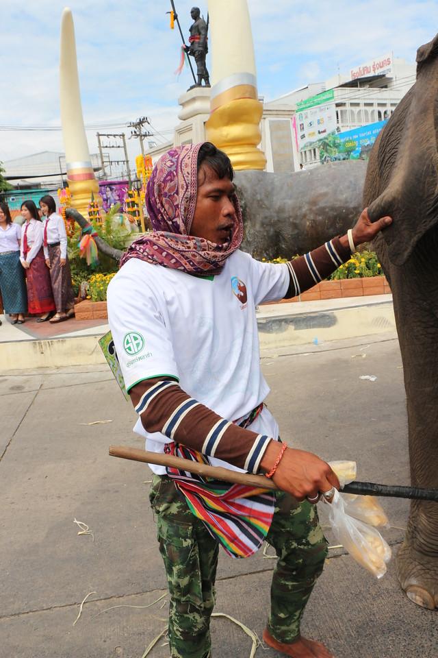 2014-11-14 Surin Elephant Welcome Feast 832