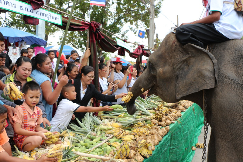 2014-11-14 Surin Elephant Welcome Feast 302.JPG