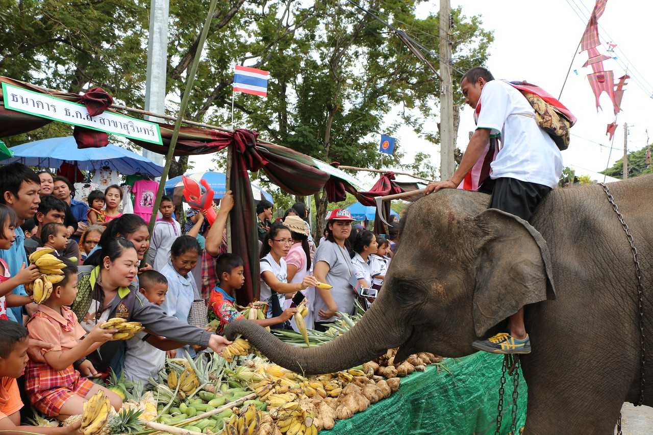2014-11-14 Surin Elephant Welcome Feast 296