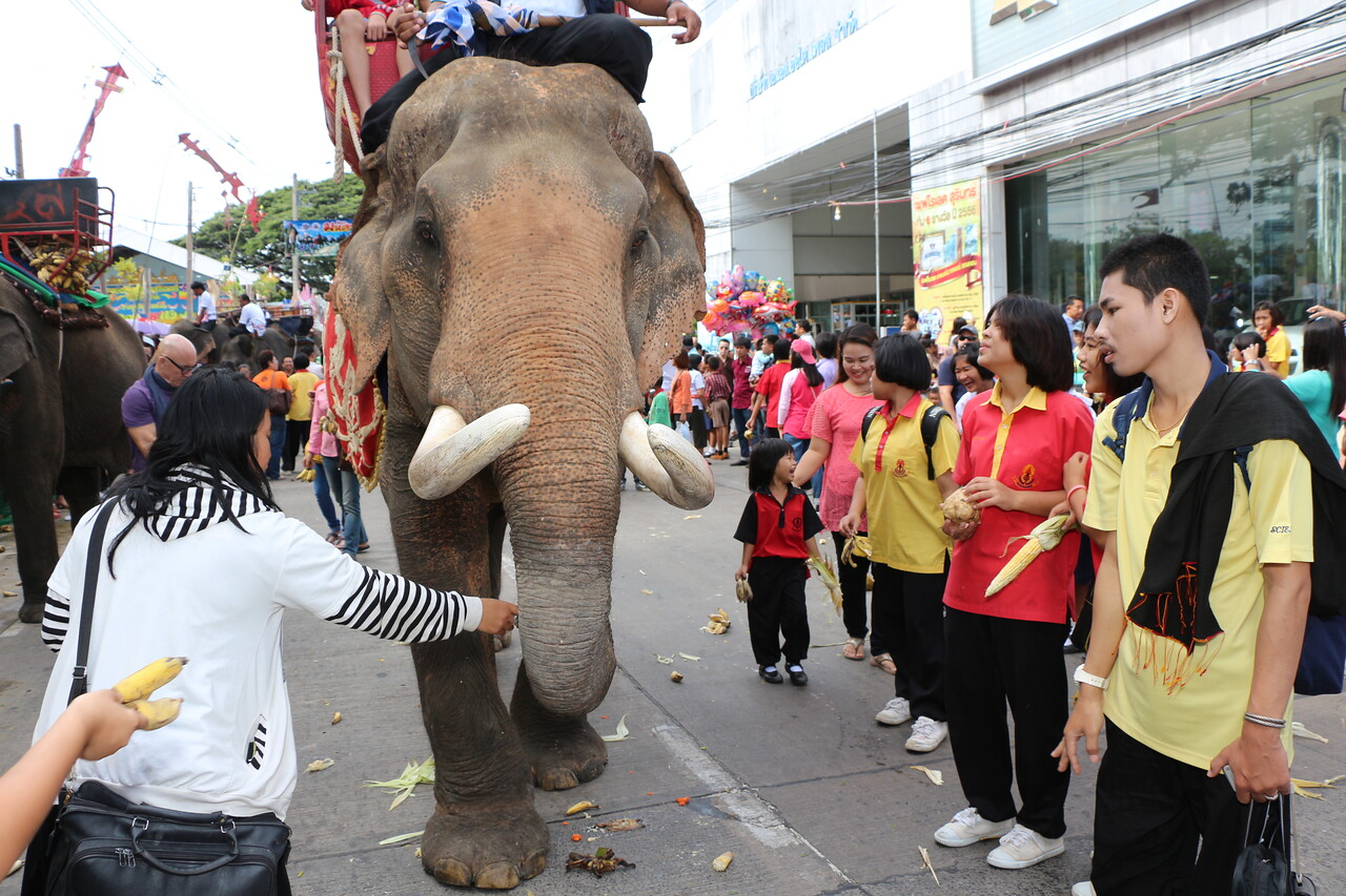 2014-11-14 Surin Elephant Welcome Feast 362