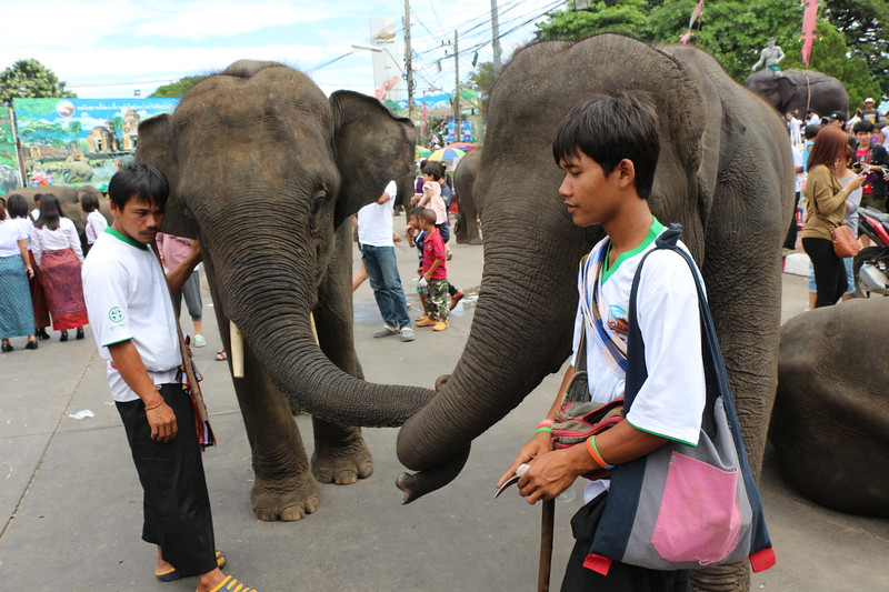2014-11-14 Surin Elephant Welcome Feast 689.JPG