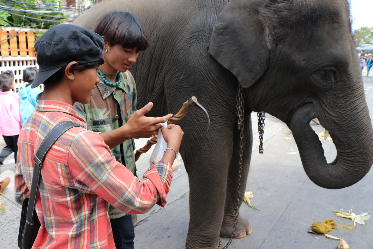 2014-11-14 Surin Elephant Welcome Feast 430