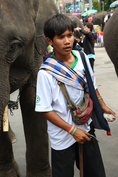 2014-11-14 Surin Elephant Welcome Feast 731.JPG