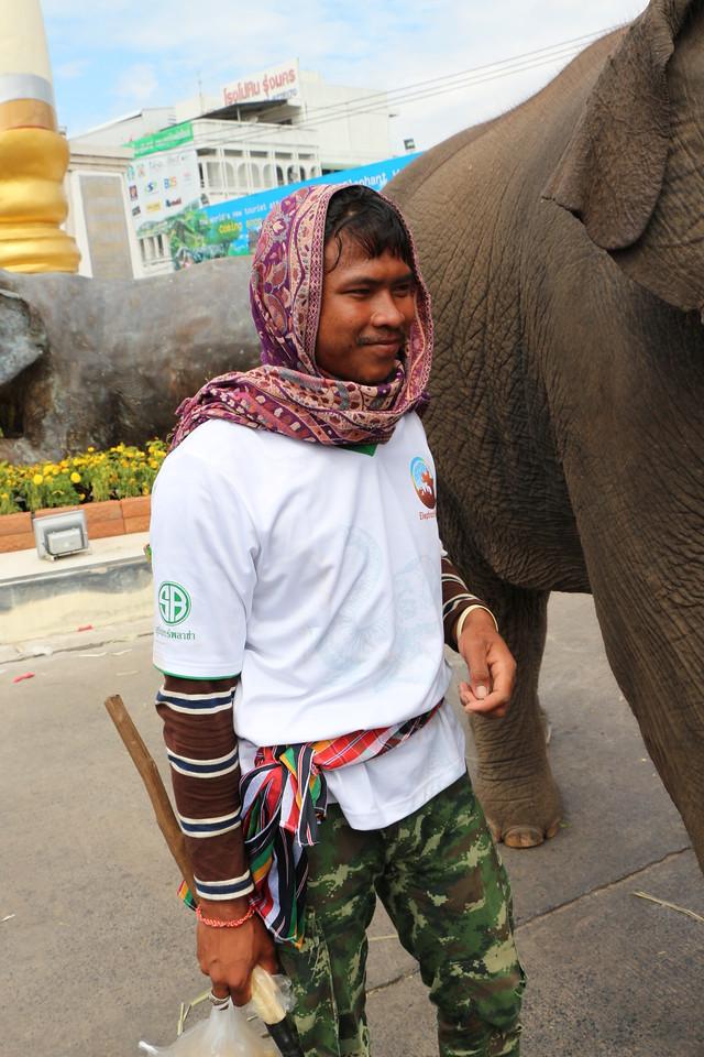 2014-11-14 Surin Elephant Welcome Feast 837