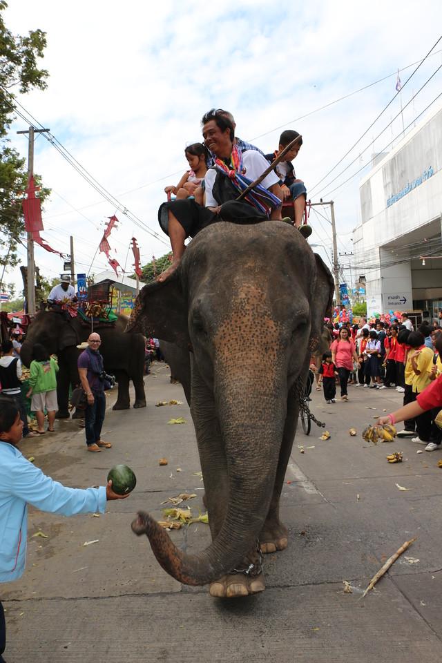 2014-11-14 Surin Elephant Welcome Feast 356