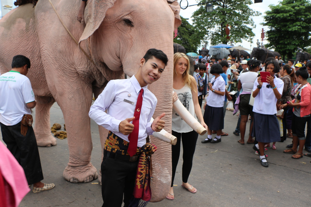 2014-11-14 Surin Elephant Welcome Feast 657