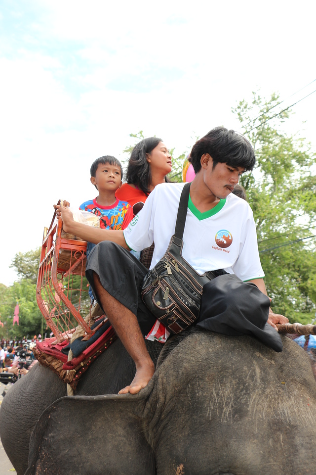 2014-11-14 Surin Elephant Welcome Feast 450