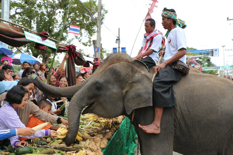 2014-11-14 Surin Elephant Welcome Feast 315.JPG