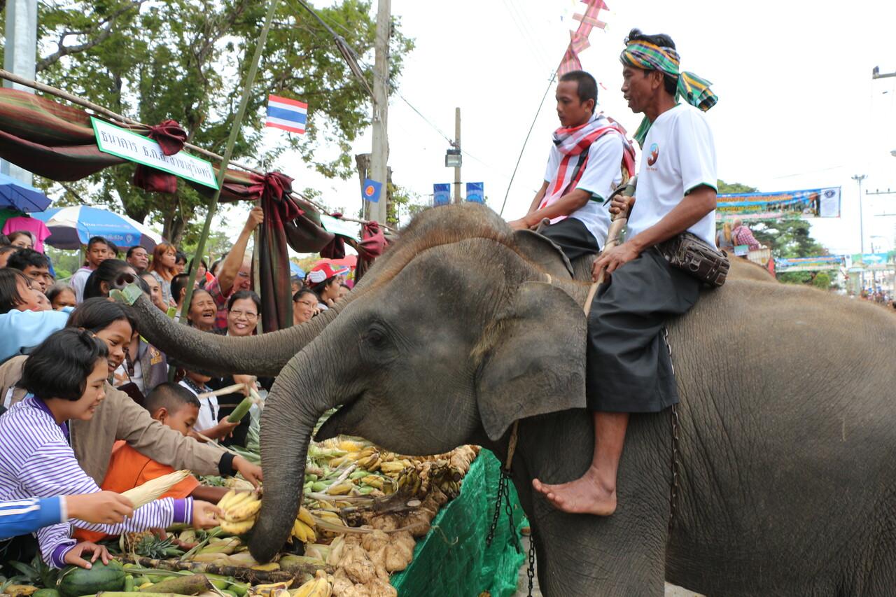2014-11-14 Surin Elephant Welcome Feast 315