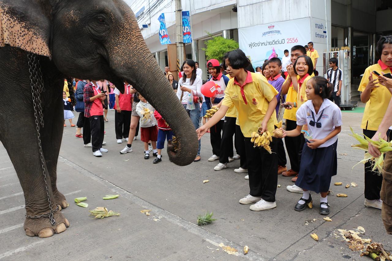 2014-11-14 Surin Elephant Welcome Feast 281
