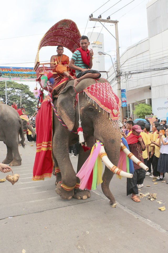 2014-11-14 Surin Elephant Welcome Feast 254