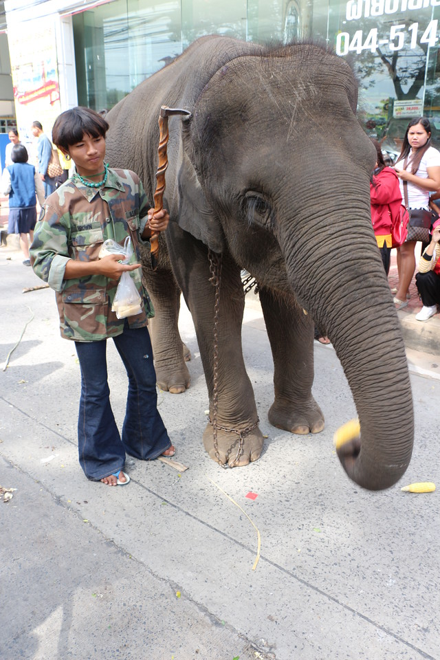 2014-11-14 Surin Elephant Welcome Feast 417
