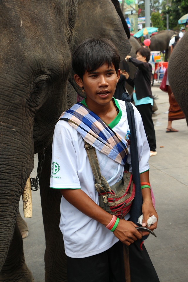 2014-11-14 Surin Elephant Welcome Feast 730