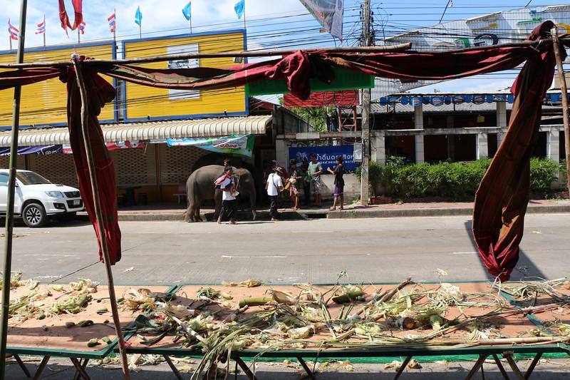 2014-11-14 Surin Elephant Welcome Feast 883.JPG