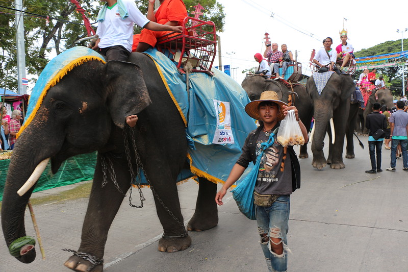 2014-11-14 Surin Elephant Welcome Feast 208
