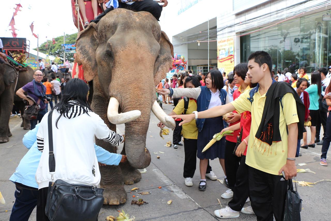 2014-11-14 Surin Elephant Welcome Feast 361