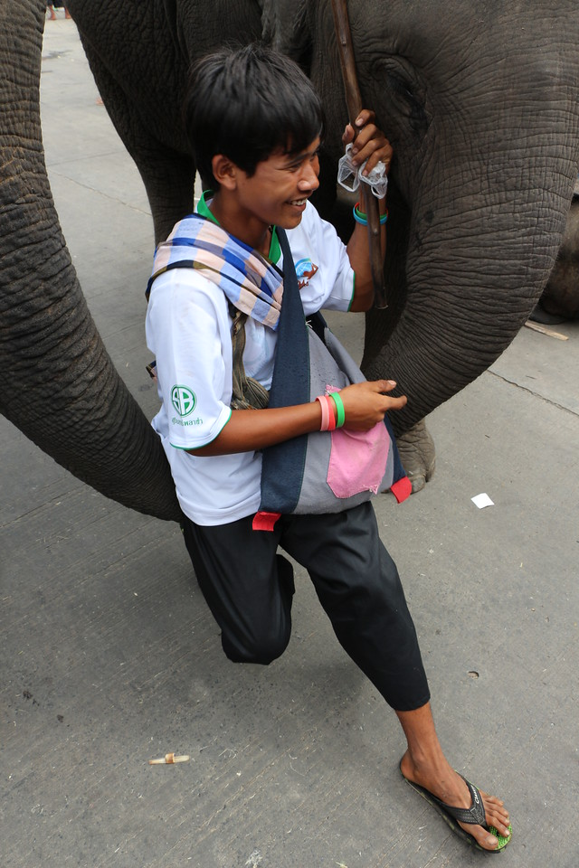 2014-11-14 Surin Elephant Welcome Feast 712