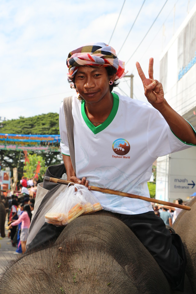 2014-11-14 Surin Elephant Welcome Feast 389