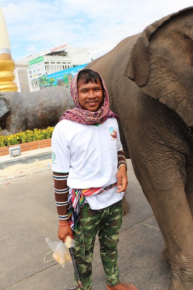 2014-11-14 Surin Elephant Welcome Feast 835