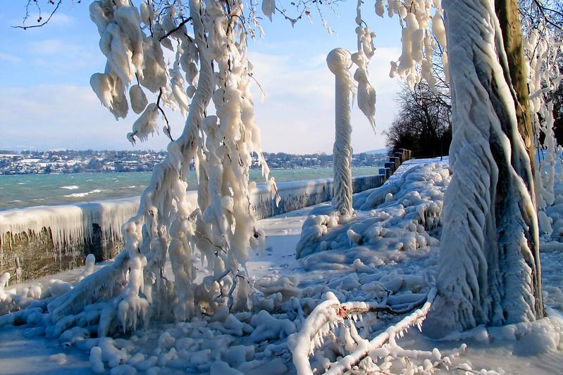 Arbres et lampadaires pris dans la glace, Genève, Suisse