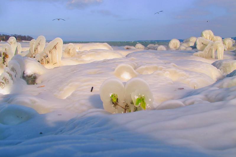 Feuilles prises dans la glace, Genève, Suisse