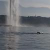 Le nageur