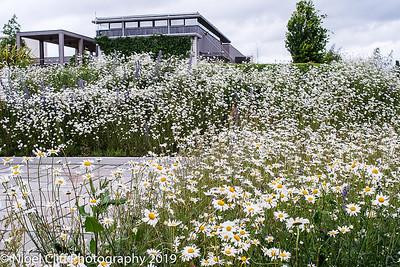 WASP National Memorial Arboretum 15 06 201900004