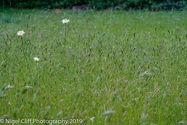 WASP National Memorial Arboretum 15 06 201900045