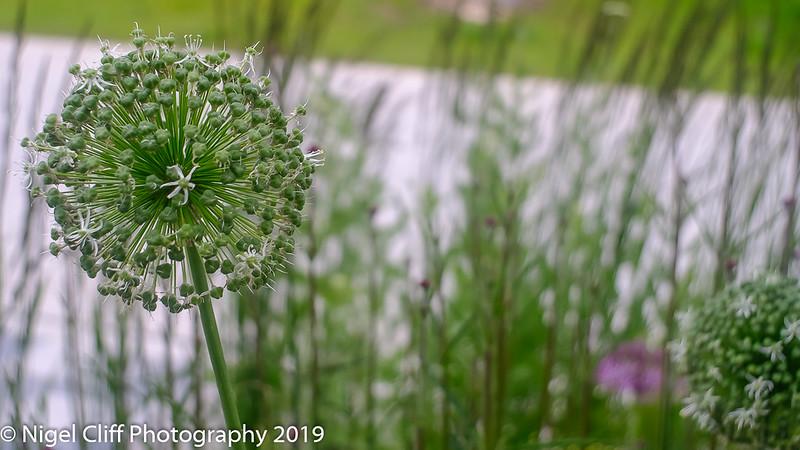 WASP National Memorial Arboretum 15 06 201900077