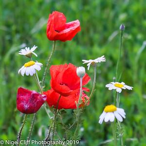 WASP National Memorial Arboretum 15 06 201900024
