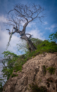Tree Clinging to Mountain