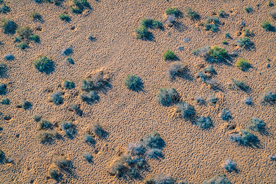 Wadi Rum desert floor animal tracks