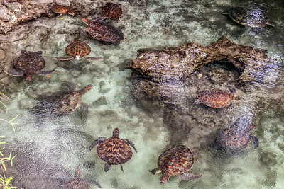 Tons of Turtles