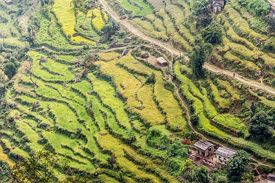 Nepali Rice Terraces