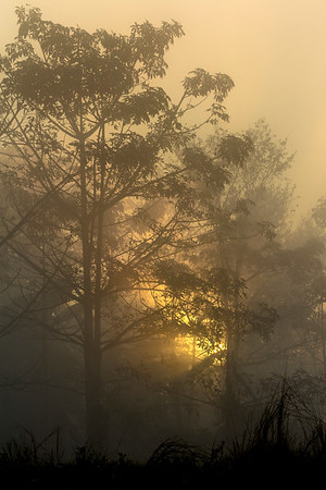 Foggy Morning in Chitwan National Park