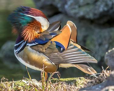 Beautiful Mandarin